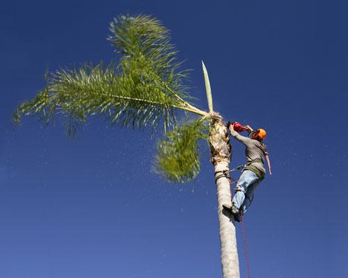 גיזום עצים בחיפה ובצפון