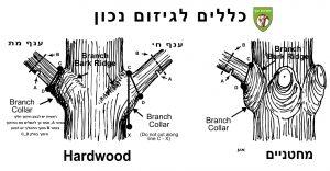 הנחיות-לגיזום-עצים