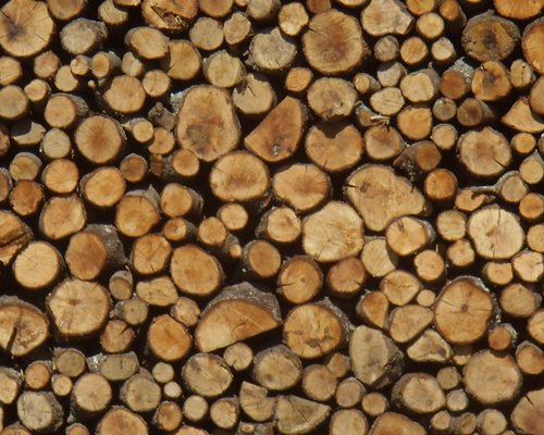 עצים להסקה בצפון הארץ
