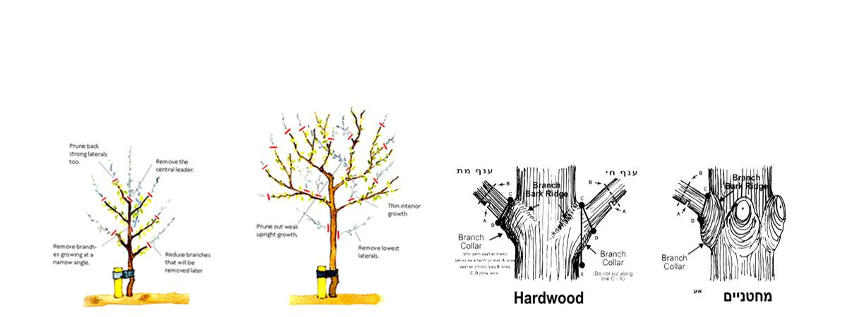ייעוץ מקצועי והנחיות לעיצוב העץ לפי הצורך